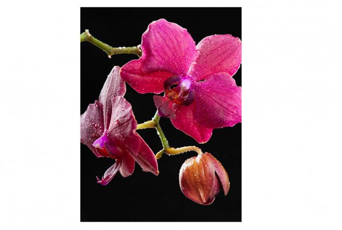 Модульная картина  Орхидея с каплями