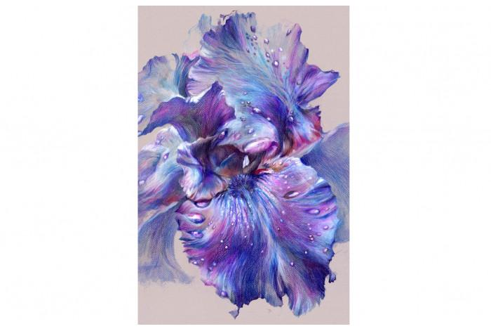 Картина  Тёмно-фиолетовый ирис