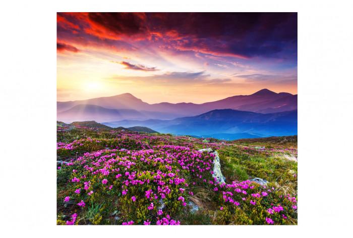 Картина Полевые цветы в горах